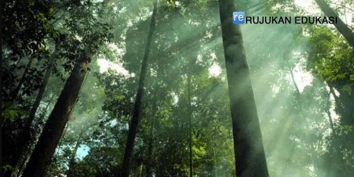 Apa Pengertian Hutan