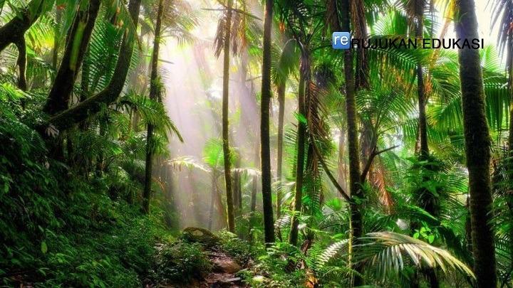 Apa Pengertian Hutan Adalah