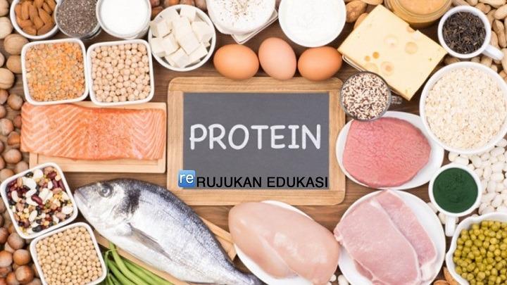 Pengertian Protein Adalah